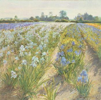 Blue and White Irises, Wortham Obrazová reprodukcia