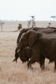 Photographie d'art Elephant Family