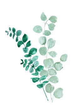 Ilustración Eucalyptus two ways