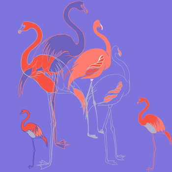 Flamingoes Kunstdruk