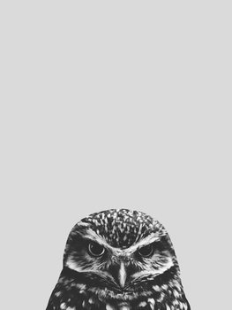 Illustration Grey owl