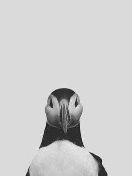 Illustration Grey puffin