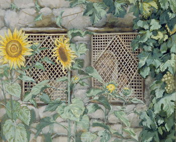 Jesus Looking through a Lattice with Sunflowers, illustration for 'The Life of Christ', c.1886-96 Reproduction de Tableau