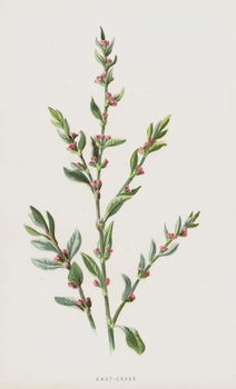 Reproducción de arte Knot-Grass
