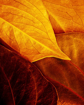 Photographie d'art Leaves