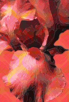 Orange Iris Obrazová reprodukcia