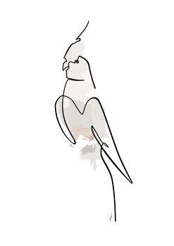Ilustración Papagalo colore