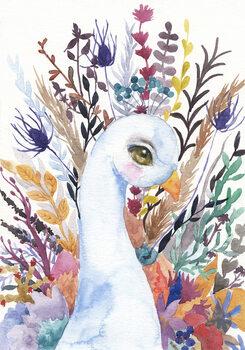 Ilustración Peacock
