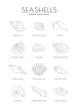 Ilustrácia Seashells