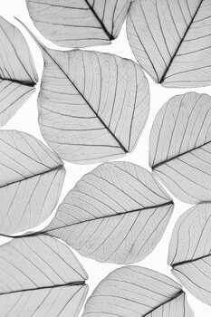 Kunstfotografie Skeleton leaf ii