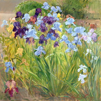 The Iris Bed, Bedfield, 1996 Kunstdruk