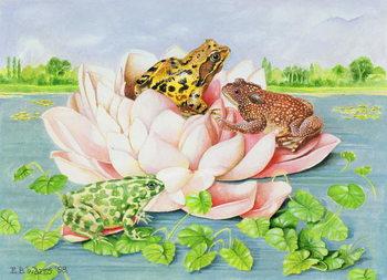 Reproducción de arte Water Lily, 1998