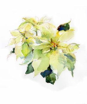 Reproducción de arte White Poinsettia, 2014,