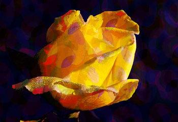 Yellow Rose Kunsttryk