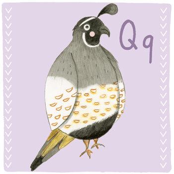 Ilustracja Alphabet - Quail