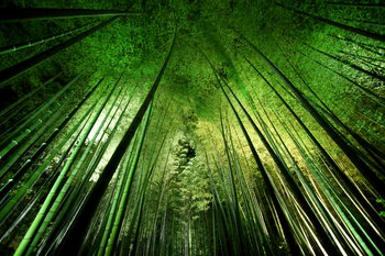 Kunstfotografie Bamboo night