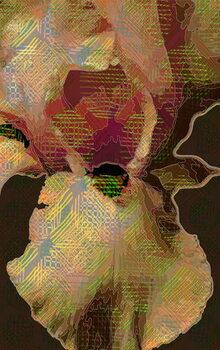Artă imprimată Bearded  Iris