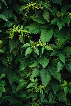 Kunstfotografi Beatuy green plant at nature