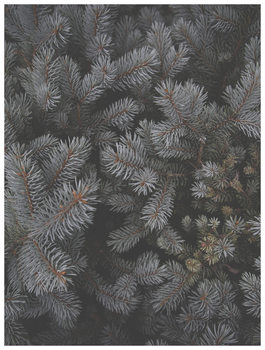 Ilustrace christmas tree foilage