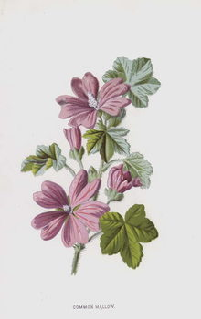 Kunsttryk Common Mallow