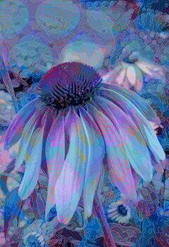 Artă imprimată Cone Flower