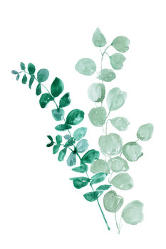 Illustration Eucalyptus two ways