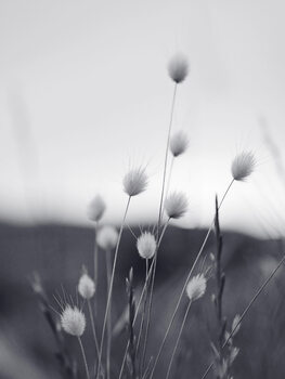 Kunstfotografi Field Grass