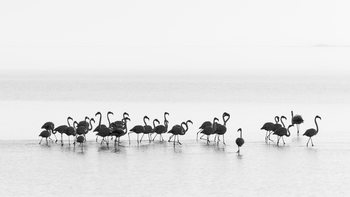 Photographie d'art Flamingos