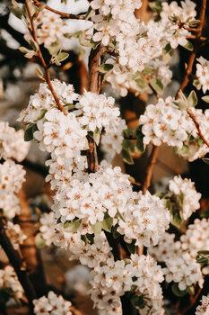 Umelecká fotografie Flower madness