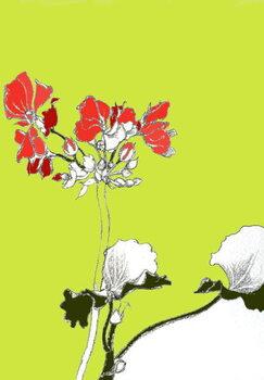 Obrazová reprodukce Geranium