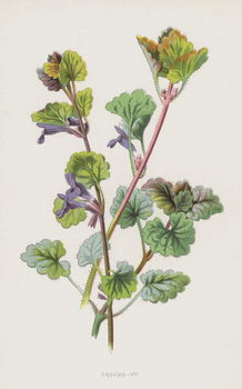 Ground-Ivy Kunstdruk