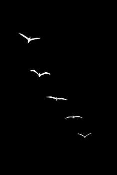 Ilustracija Heavenly Creatures DARK