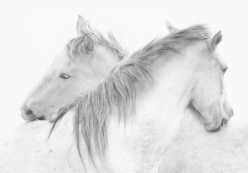 Photographie d'art Horses