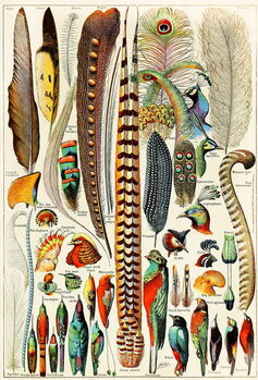 Illustration of feathers and birds c.1923 Reproduction de Tableau
