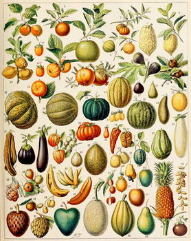 Reproducción de arte Illustration of Fruit c.1923