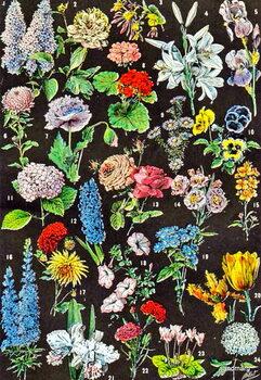 Kunstdruk Illustration of garden flowers c.1923
