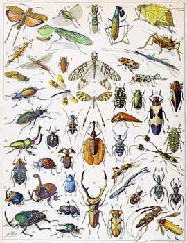 Reprodukcija umjetnosti Illustration of  Insects c.1923