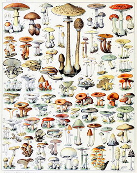 Reproducción de arte Illustration of Mushrooms  c.1923