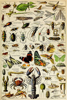 Obrazová reprodukce Illustration of  various Invertebrates  c.1923