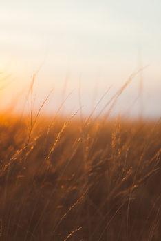 Fotografia artistica Last sunrays over the dry plants