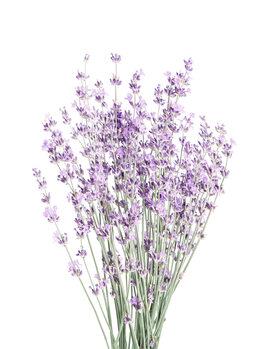 Photographie artistique Lavender