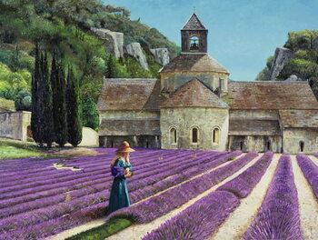 Obrazová reprodukce Lavender Picker, Abbaye Senanque, Provence