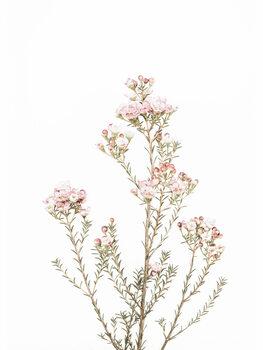 Fotografia artystyczna Little Blooms