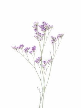 Photographie artistique Little Floral