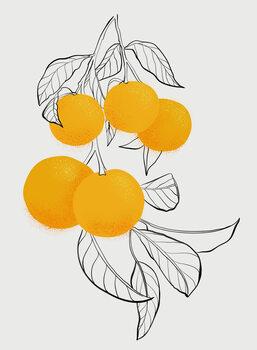 Ilustrace Mabel orange