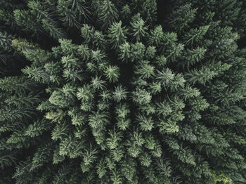 Kunstfotografie Moody forest from above