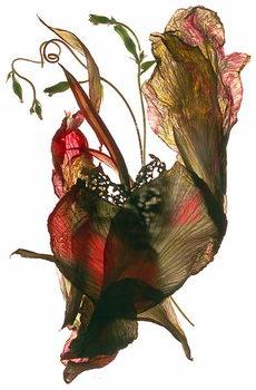 Reproducción de arte Morning Glory Canna Heart, 2012,
