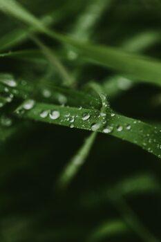 Kunstfotografi Mystical grass