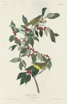 Reproducción de arte  Nashville Warbler, 1830