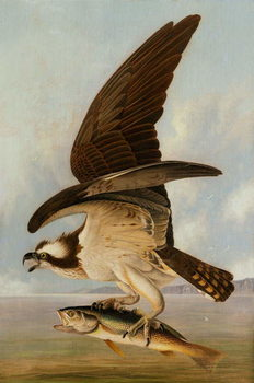 Reproducción de arte  Osprey and Weakfish, 1829